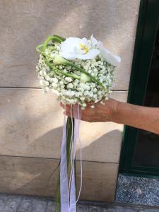 ram de núvia orquídea