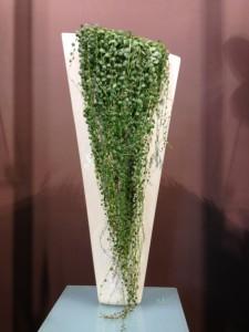 Plantas succulentas