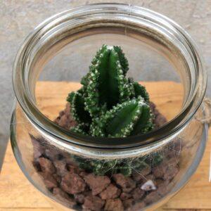 Cactus per l'ordinador