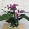 Anthurium-vidre-flors-pasanau (1)