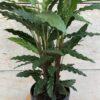 calathea-flors-pasanau (1)
